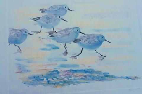 11-Helen-MacKinlay-Five-Sanderlings