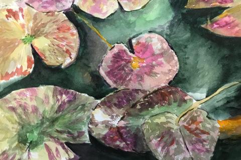 2-Lynn Zwagerman-Pacific House Pond Lillies